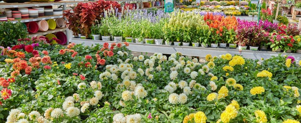 Löwer Garten